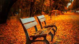 Foliage che passione! 8 boschi meravigliosi da scoprire