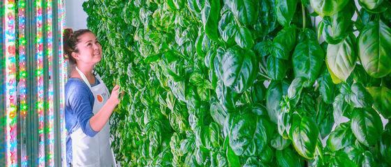 Plenty, l'indoor farming che piace ai big della tecnologia