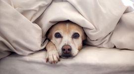Il decalogo per proteggere gli animali dal freddo
