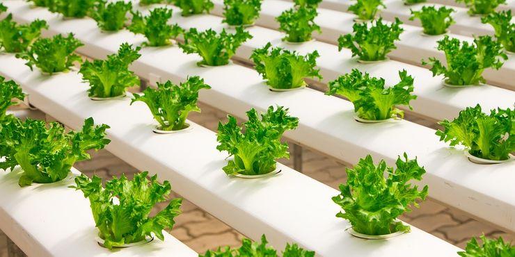 Come realizzare un piccolo orto indoor