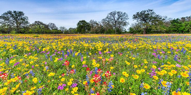 15 fiori per mandare un messaggi speciale