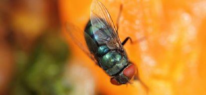 4 ricette efficaci per tenere lontane le mosche