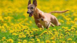 Allergie in primavera: come proteggere cani e gatti
