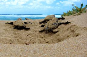 Nella spiaggia più inquinata del mondo tornano le tartarughe