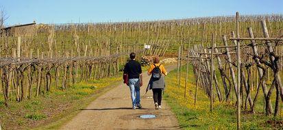 6 benefici del camminare mezz'ora al giorno