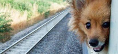 cani treno
