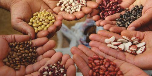 Biodiversità agraria e alimentare in Italia.