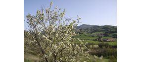 Raccolta di ciliegie e fragole
