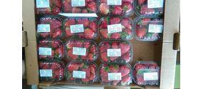Frutta e verdura fresche e di stagione