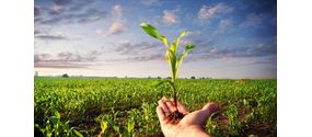 Semi, Patate da seme, Piantini, Sovesci e Cereali Bio e BioDinamici