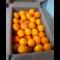 Arance bio per spremute e marmellate Kg 16