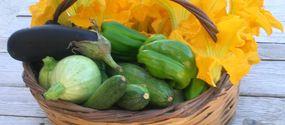Raccolta verdure biologiche#agriturismo Caresto Gubbio