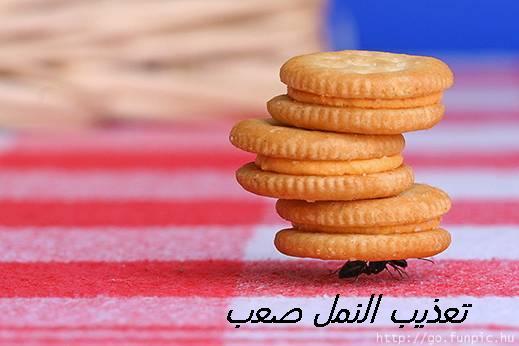 اليوم جايبه لكم ههه صورة نملة ابوووها معاقبها...!!!! ^ ^