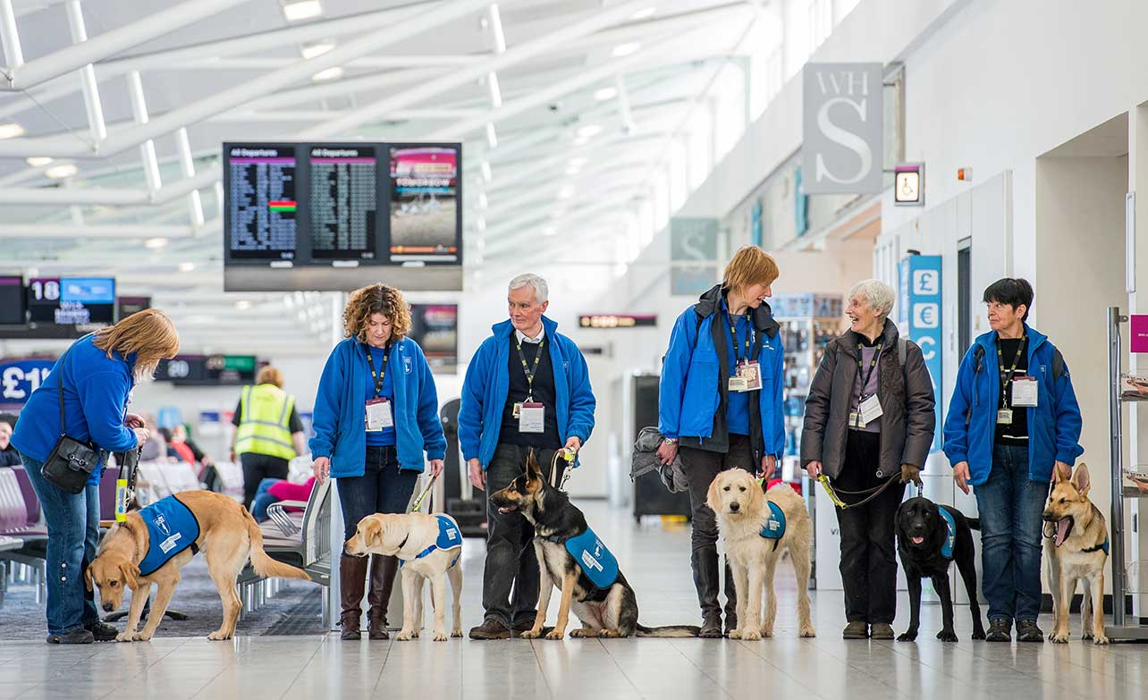 Guide Dogs Uk Training For Taxis