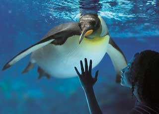 London Aquarium Penguine Underwater
