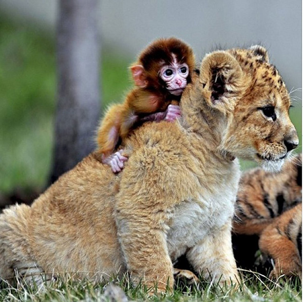 International_hug_day_-_cute_animals_hug