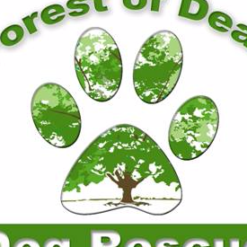 Forest of Dean Dog Rescue