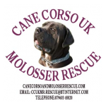 Cane Corso UK & Molosser Rescue