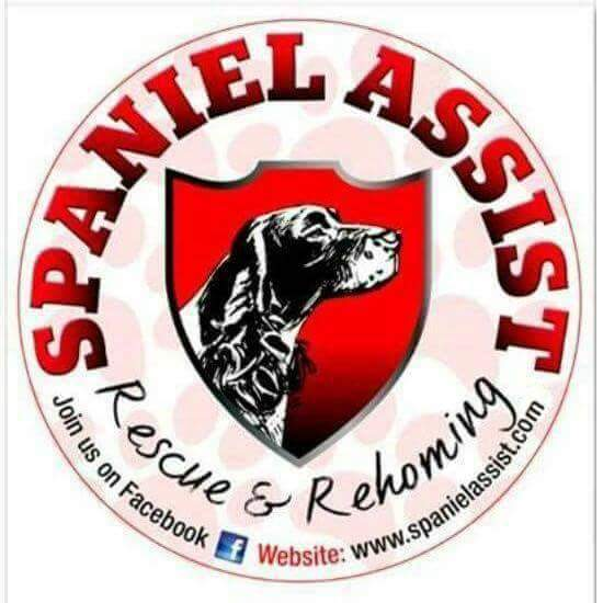 Spaniel Assist Rescue and Rehoming