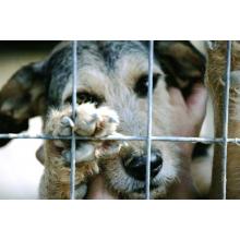 SOS Animals UK