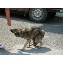 Rudozem Street Dog Rescue (RSDR)