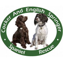 Cocker And English Springer Spaniel Rescue