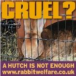 Rabbit Welfare Association And Fund