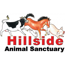 Hillside Animal Sanctuary - Norwich