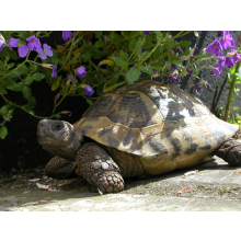 Norfolk Tortoise Club