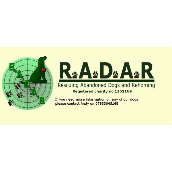 Radar - Rescuing Abandoned Dogs and Rehoming