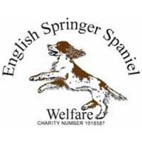 English Springer Spaniel Welfare