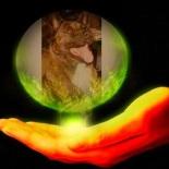 Sukis Canine Rescue Crew