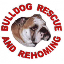 Bulldog Rescue & Rehoming