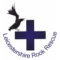 Leicestershire Rook Rescue