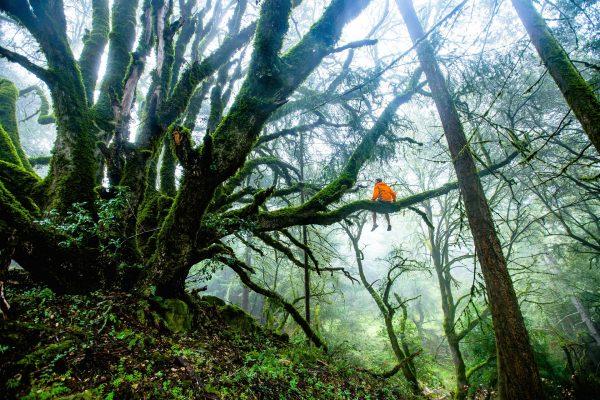 La maratona nella giungla