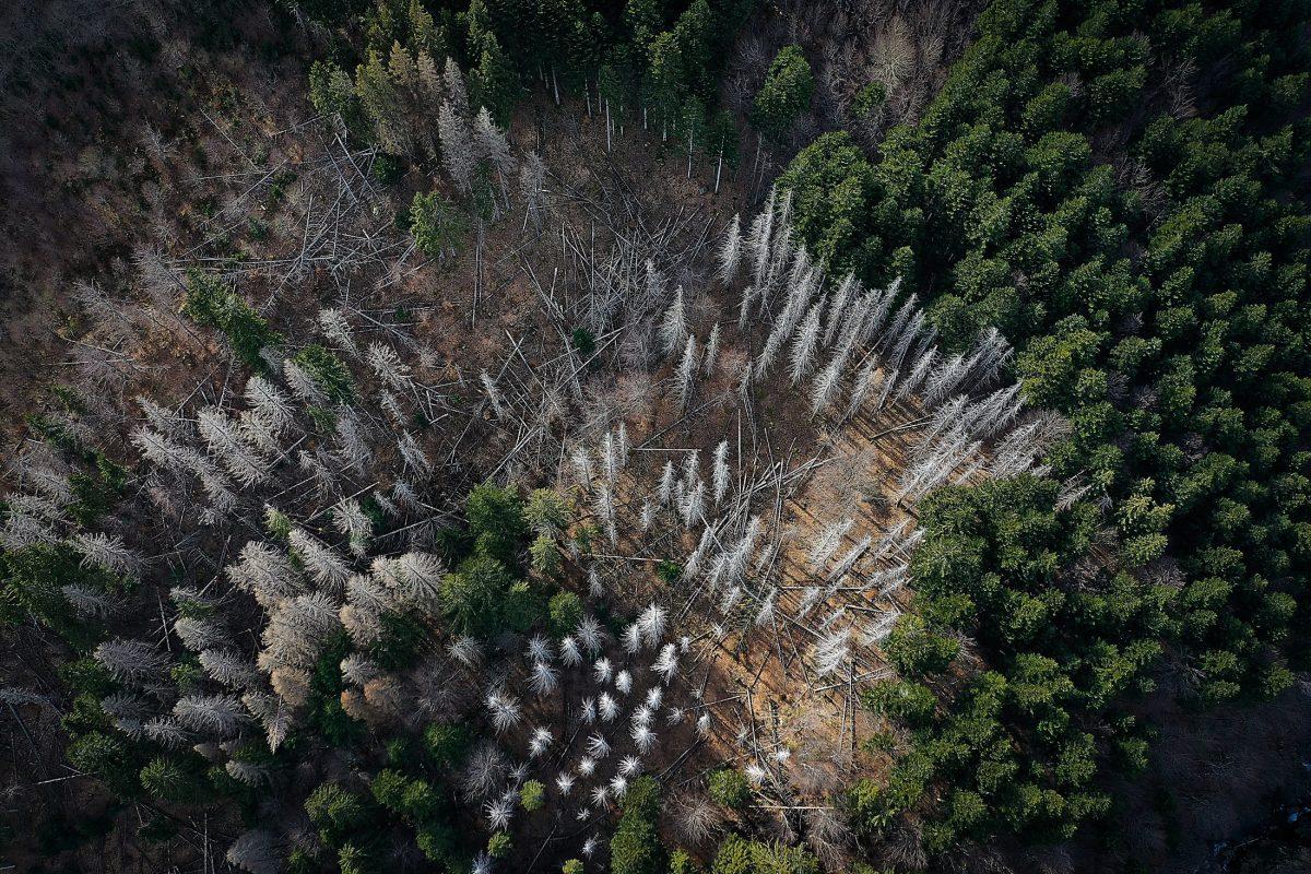 Inquinamento ambientale – Non esiste un pianeta B