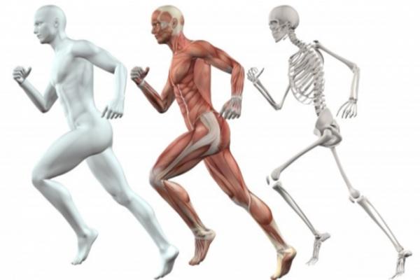 L' Osteopatia e la sua utilità nell'endurance