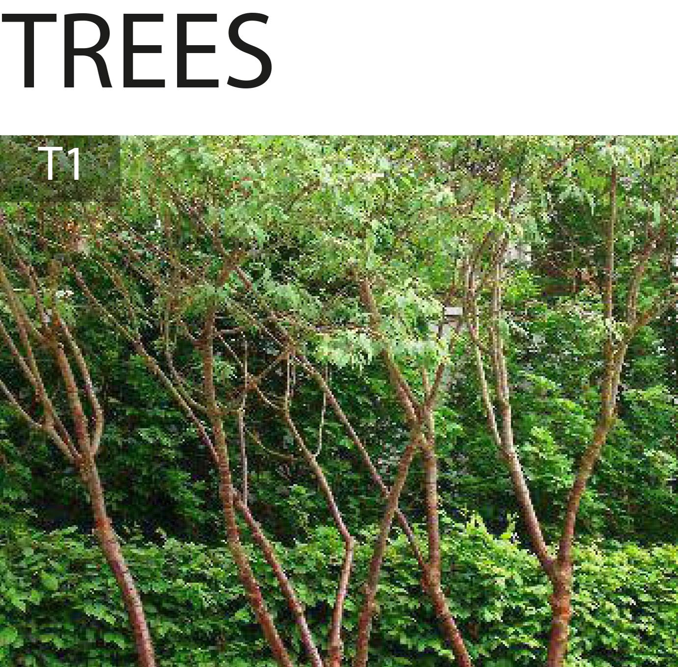 Tree planting options