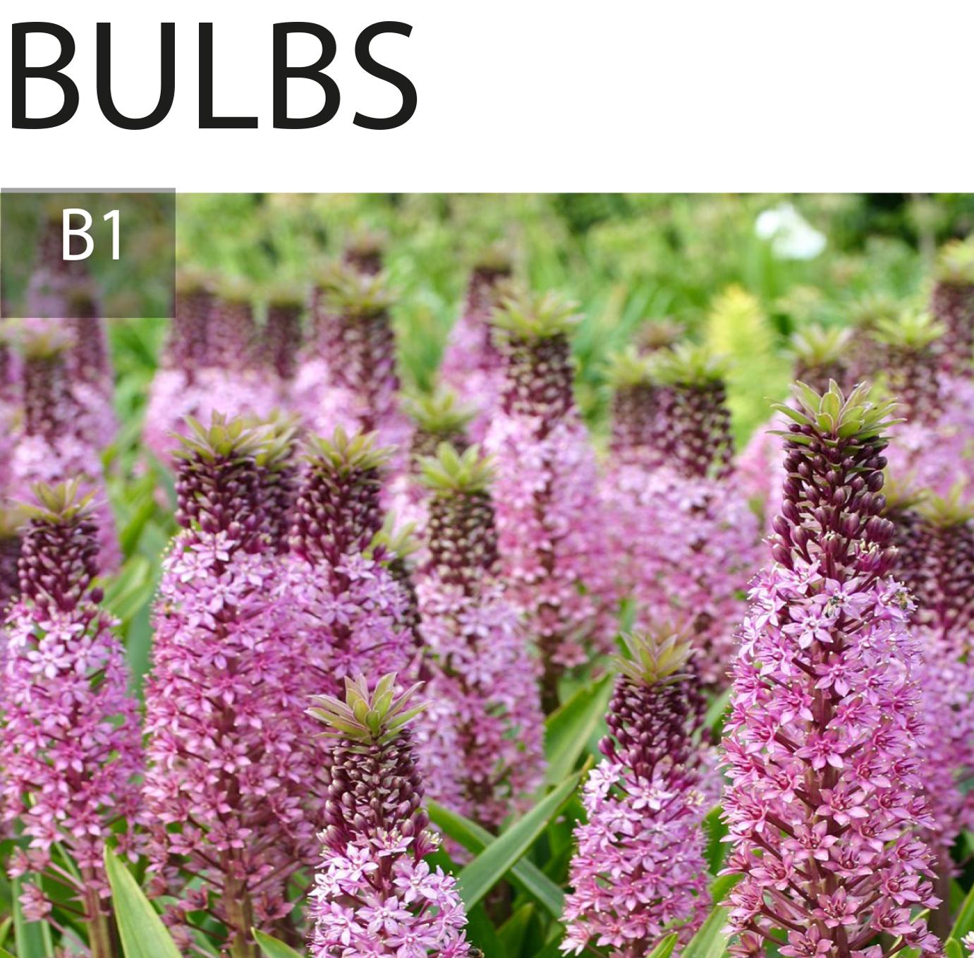 Bulb planting options