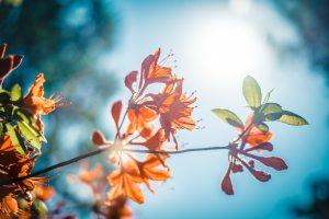Autumn flowers shown against blue skies