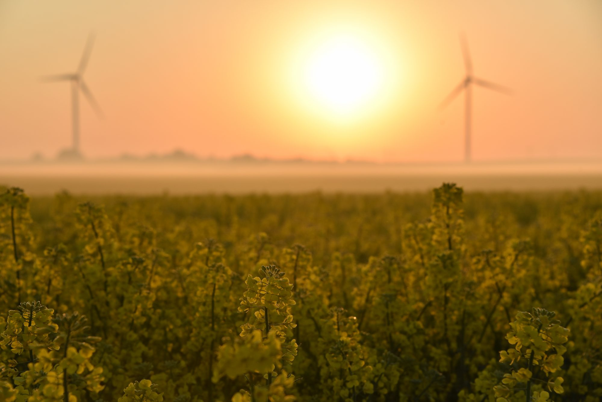 Wind turbines in green landscape fields