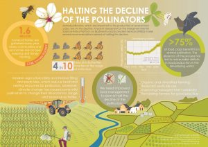 Infographic showing the decline of the pollinators