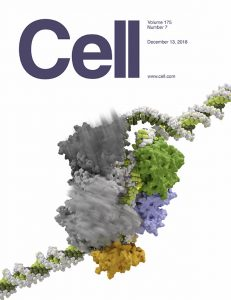 Cell 2018 cover