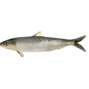 Fish Sardine 500g