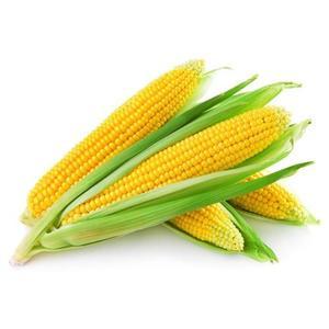 Sweet Corn UAE 1kg