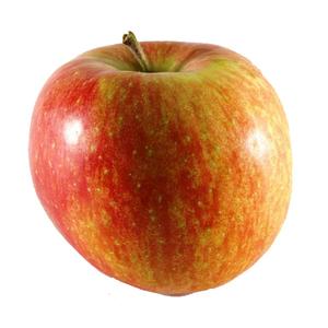 Organic Apple Elstar 500g