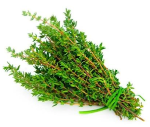 Thyme Holland 1pkt