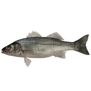 Sea Bass 1kg