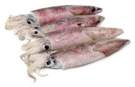 Squid Small 500g