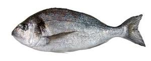 Fresh Seabream 500g